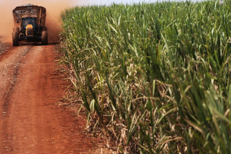 Tractor carries sugar cane on a field at the property of Grupo Moreno in Ribeirao Preto