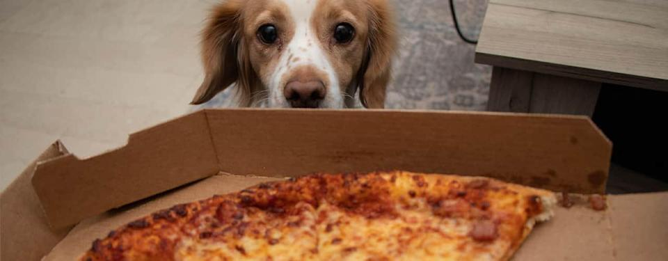 pizza and dog