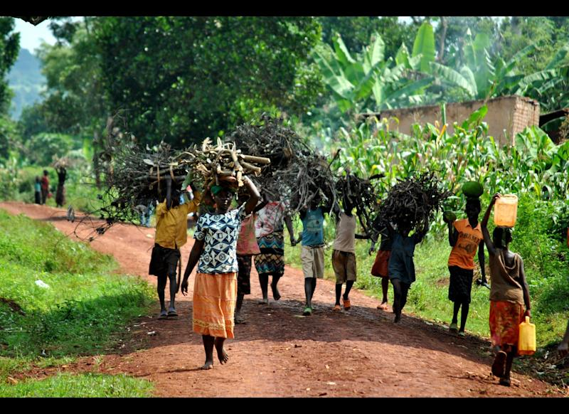 Women in Uganda represent 80% of the agricultural labor force, are responsible for about 80% of the food crop production and continue to contribute about 60% of the labor for cash crop production.