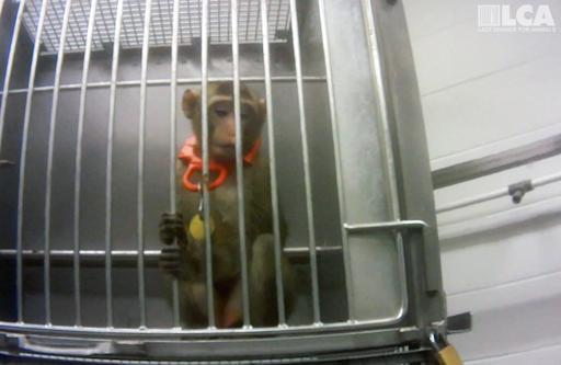 Actor & Animal Rights Activist Joaquin Phoenix Narrates Undercover Video Footage Investigating the Unethical World of Lab Animal Testing