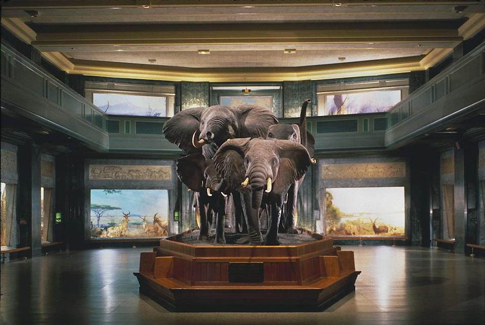 """<p><strong>What's this place all about?</strong><br> Truly one of the world's great natural history museums, the American Museum of Natural History is a grand monolith from the late 19th-century that spans four city blocks on the Upper West Side, just across from <a href=""""https://www.cntraveler.com/activities/new-york/central-park?mbid=synd_yahoo_rss"""" rel=""""nofollow noopener"""" target=""""_blank"""" data-ylk=""""slk:Central Park"""" class=""""link rapid-noclick-resp"""">Central Park</a>. When visitors choose a museum in NYC, it's likely either this one or the <a href=""""https://www.cntraveler.com/activities/new-york/the-metropolitan-museum-of-art?mbid=synd_yahoo_rss"""" rel=""""nofollow noopener"""" target=""""_blank"""" data-ylk=""""slk:Met"""" class=""""link rapid-noclick-resp"""">Met</a>.</p> <p><strong>What will we find in the permanent collection?</strong><br> All aspects of the natural world are represented here, from a vast collection of taxidermy mammals (many donated by Theodore Roosevelt, from his African safaris), to depictions of the life of Native American tribes, to an entire hall dedicated to marine life—including a life-size model of a blue whale. The crown jewel for many, though, is the dinosaur floor, with an imposing skeleton of a Tyrannosaurus Rex that dominates the room.</p> <p><strong>What about temporary exhibits?</strong><br> There are usually two special exhibits at any time, including recent shows like an in-depth, immersive exhibit dealing with human senses and perception and a deep-dive into the world of mummies, with examples of ancient Egyptians and Peruvians preserved for thousands of years.</p> <p><strong>What did you make of the crowd?</strong><br> Visitors come from all over the world and all walks of life, but children are often the majority here, and they usually head straight to the dinosaur and marine life exhibits.</p> <p><strong>Any guided tours worth trying?</strong><br> There are free guided tours offered daily, which are informative and fascinating, though wandering on you"""
