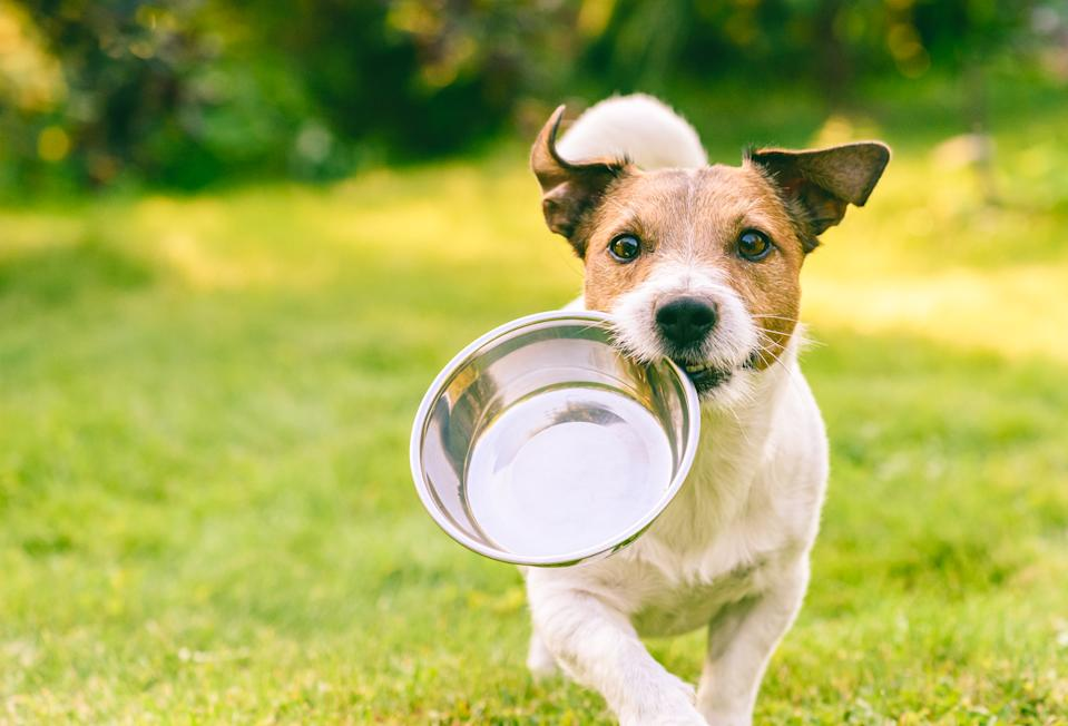 Ruh-roh, we're out of kibble. (Photo: Getty Images)