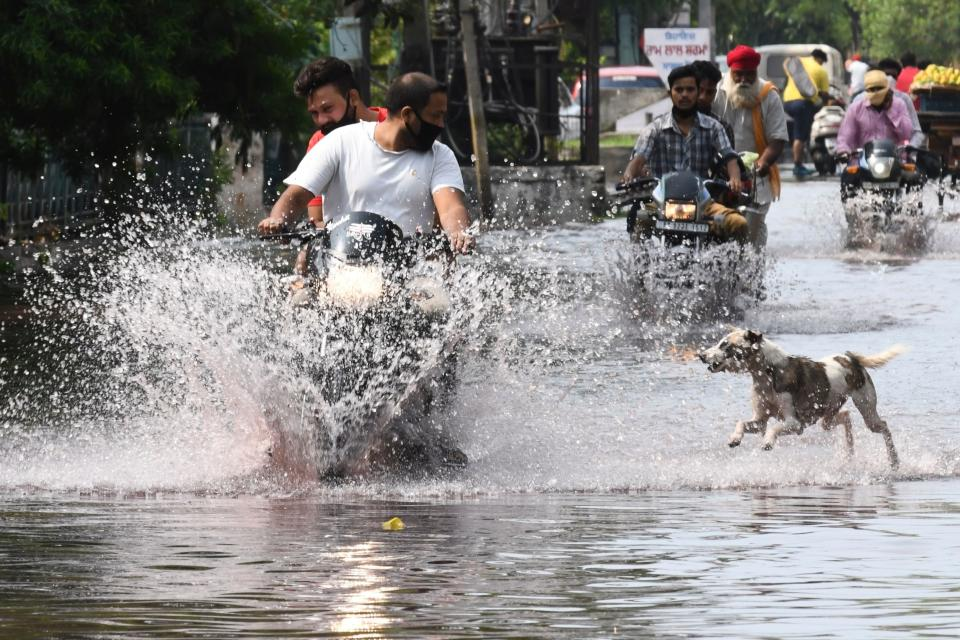 A dog chases a motorist along a water-logged street during heavy rain in Amritsar on July 19, 2020. (Photo by NARINDER NANU / AFP) (Photo by NARINDER NANU/AFP via Getty Images)
