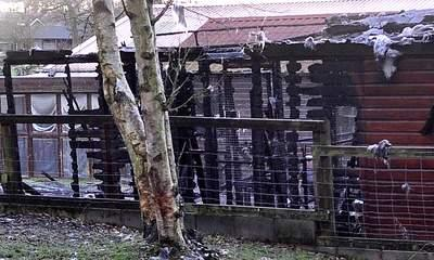 Animals Killed As Fire Spreads Through Cattery