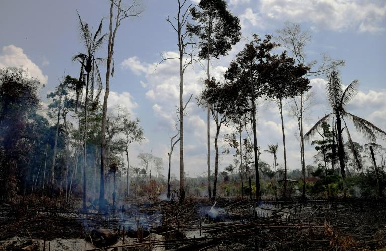 Burnt and charred trees smoulder in the Amazon rainforest in Brazil's Rondonia state