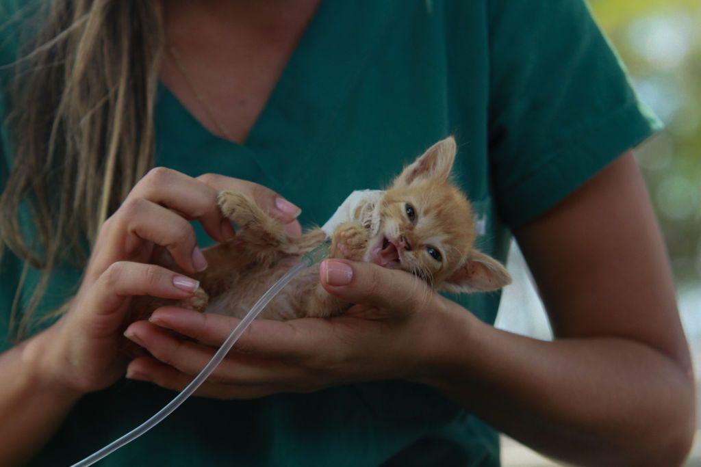 <p>A kitten receives medical attention after being rescued in Brazil following the Brumadinho dam disaster on January 30, 2019.</p>