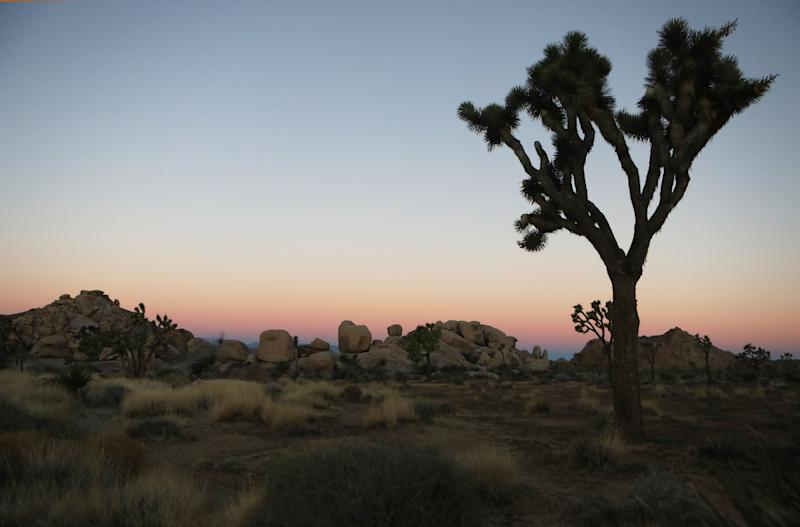 Just eight rangers were on hand to oversee Joshua Tree's sprawling 790,636 acres during the shutdown. (Photo: Mario Tama via Getty Images)
