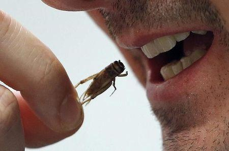 An employee eats a cricket at the Micronutris plant in Saint Orens de Gameville