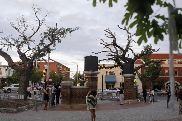 Clones of poisoned oak trees at Toomer's Corner are available for purchase