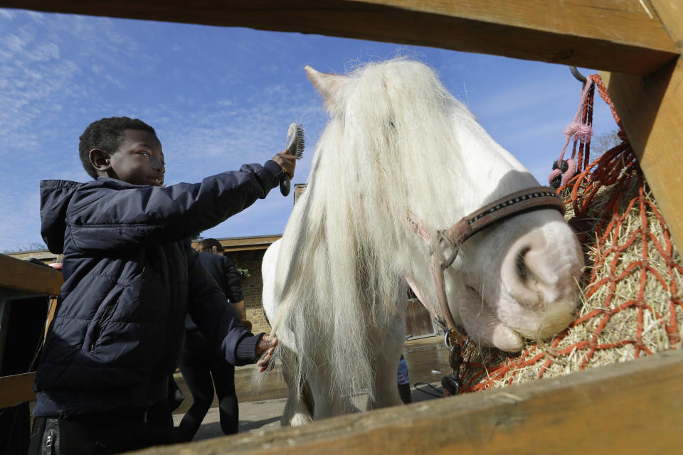 Shaddai Mcleod, 9, brushes Rose at Ebony Horse Club in Brixton, south London, Sunday, April 18, 2021. In the midst of south London's hustle and bustle, only a 10-minute walk from a subway station, is a school where children are encouraged to horse around. The Ebony Horse Club provides 140 rides per week to children in the local community offering them the opportunity to learn important life skills along with horseback riding. (AP Photo/Kirsty Wigglesworth)