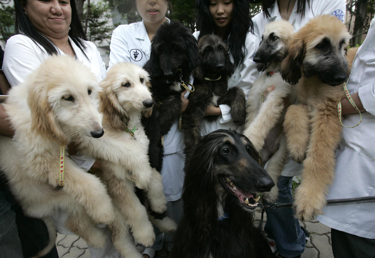 The world's first cloned dog Snuppy and its puppies are seen with researchers at Seoul National University's College of Veterinary Medicine in Seoul