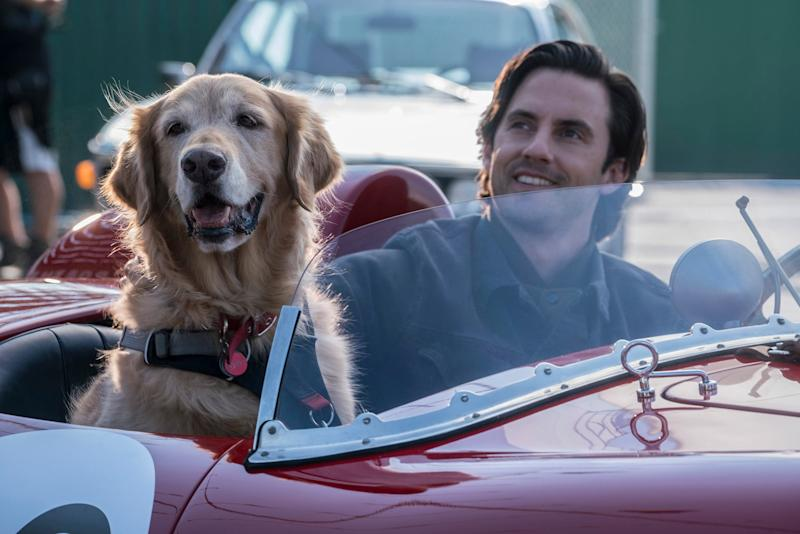 THE ART OF RACING IN THE RAIN, from left: Enzo (voice: Kevin Costner), Milo Ventimiglia, 2019. ph: Doane Gregory / TM & copyright Twentieth Century Fox Film Corp. All rights reserved. / courtesy Everett Collection