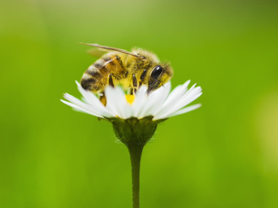 Hay fever season may contribute to the coronavirus' spread. (Stock, Getty Images)
