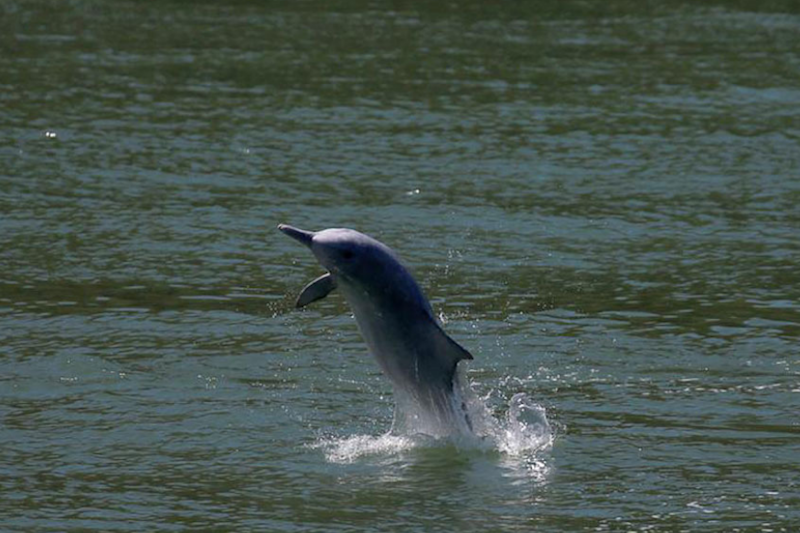 Dolphins Are Becoming Resistant to Antibiotics, and Here's Why It Should Bother Us