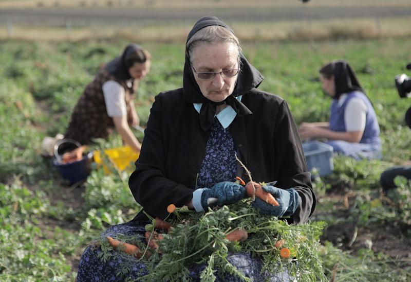 "This undated image released by National Geographic Channels shows Hutterite Judy Hofer picking carrots from the garden in King Colony, Mont. ""Meet the Hutterites,"" a National Geographic documentary series about a small religious colony in rural Montana. (AP Photo/National Georgraphic, Ben Shank)"