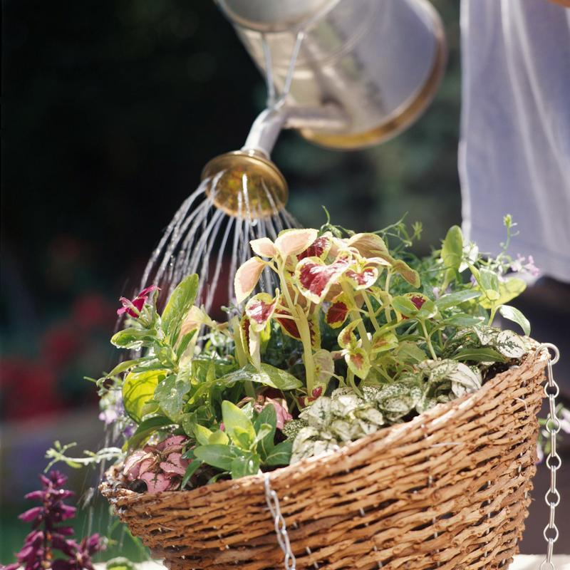 using water canister for hanging basket plants