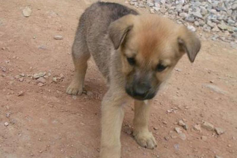 Delhi Man 'Slowly' Runs Over Sleeping Puppy, CCTV Footage Leads to Arrest