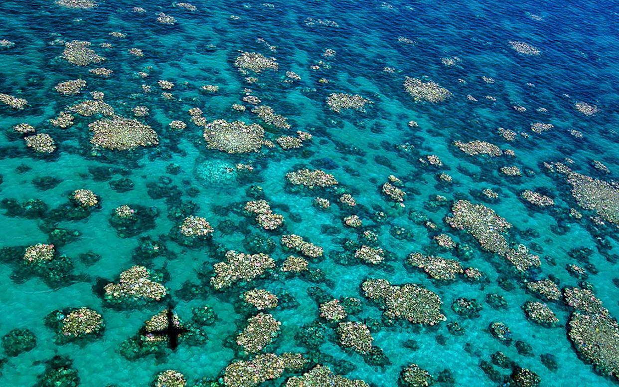 An aerial view of bleaching of the Great Barrier Reef - AFP