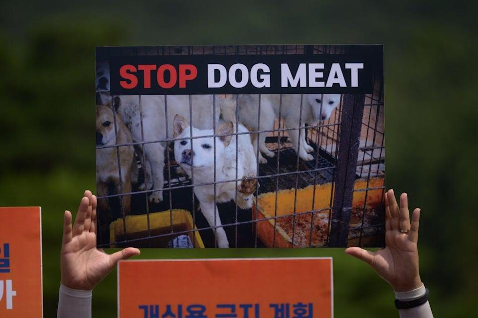 Protests against dog meat have been increasing in the country  (Getty Images)
