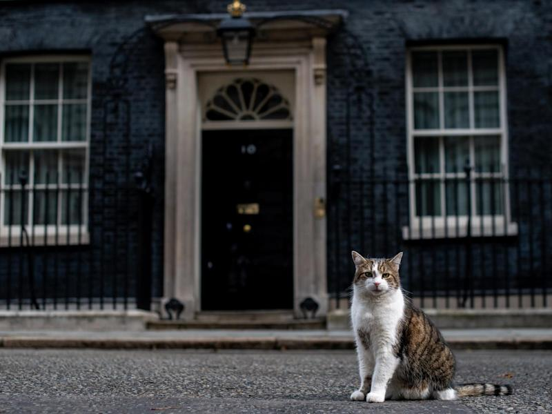 Both Conservatives and Labour would expand mandatory microchipping to cats, including Larry of Downing Street: Getty