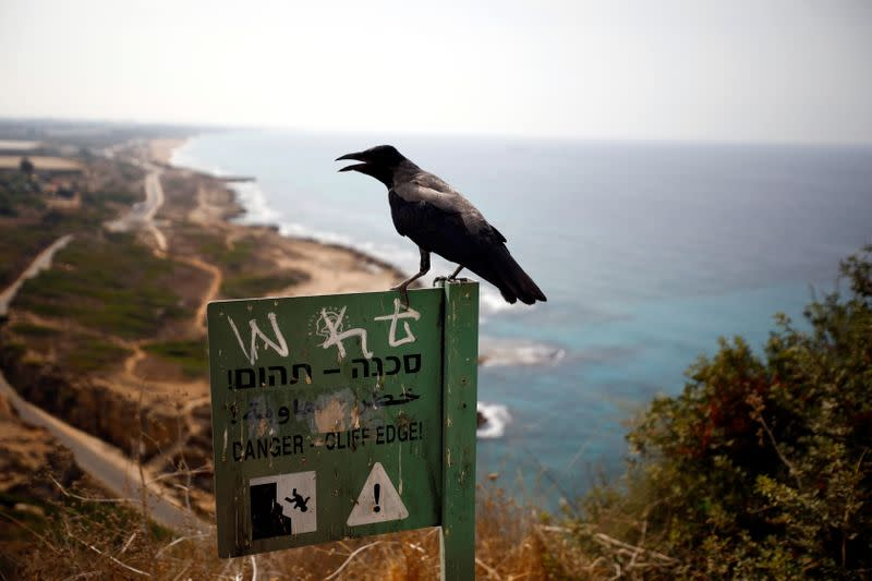 A crow perches on a sign post as the coastline of the Mediterranean Sea is seen in the background, near Rosh Hanikra, northern Israel