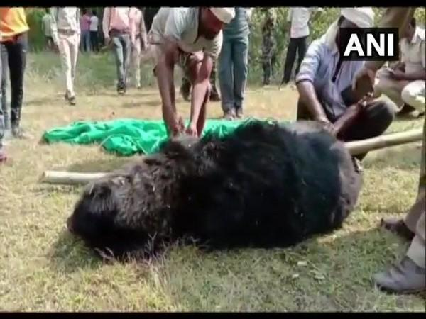 Carcass of a bear found in Rajpur forest zone of Balrampur district on Monday. Photo/ANI