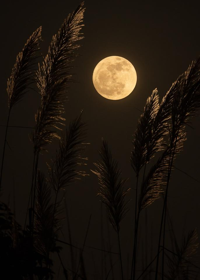 """<p>Essentially, there are two factors that go into making a supermoon: <a href=""""http://solarsystem.nasa.gov/news/922/what-is-a-supermoon/"""" target=""""_blank"""" class=""""ga-track"""" data-ga-category=""""Related"""" data-ga-label=""""http://solarsystem.nasa.gov/news/922/what-is-a-supermoon/"""" data-ga-action=""""In-Line Links"""">the moon's perigee</a> and when the moon is full. A perigee is a fancy name for the point where the moon's orbit is the closest to Earth, which is roughly 226,000 miles from Earth. A supermoon will also appear brighter and larger than a normal full moon, hence making it """"super."""" There will be two supermoons this year on March 9 and April 7.</p>"""