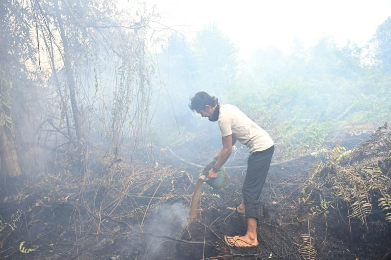 Some of the most serious fires happen in carbon-rich peatlands (AFP Photo/ADEK BERRY)