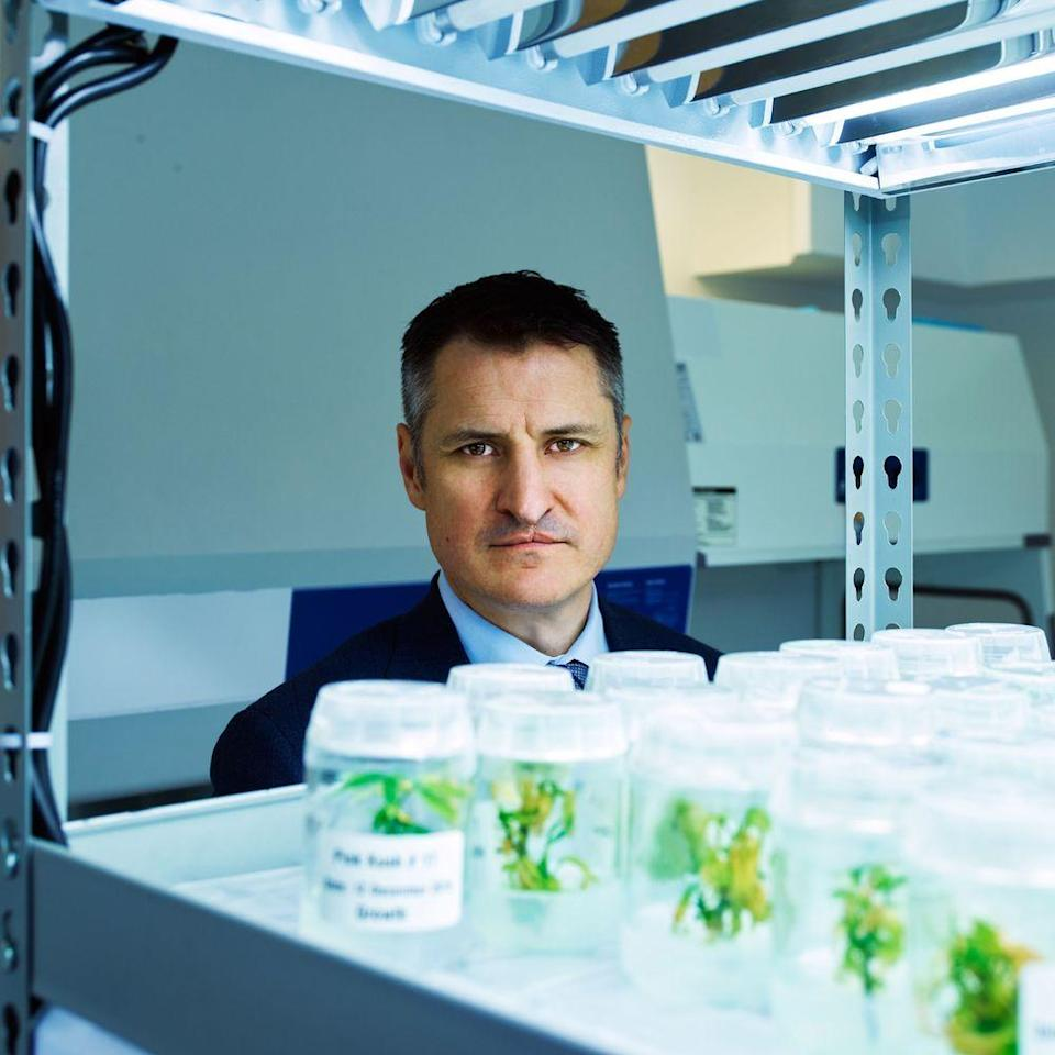 GROWTH INDUSTRY: CEO Brendan Kennedy with marijuana 'tissue culture clones' at Tilray's Nanaimo headquarters.