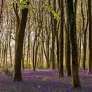 """<p>Micheldever Woods in Hampshire is one of the best places to see the blossoming bluebells. Predominantly a beech wood, it's home to diverse range of <a href=""""https://www.housebeautiful.com/uk/garden/a36187095/birds-wildlife-iolo-williams-homebase/"""" rel=""""nofollow noopener"""" target=""""_blank"""" data-ylk=""""slk:birds"""" class=""""link rapid-noclick-resp"""">birds</a>, insects and wildlife. A visit here is certain to lift your spirits. </p><p><a class=""""link rapid-noclick-resp"""" href=""""https://www.forestryengland.uk/micheldever-wood"""" rel=""""nofollow noopener"""" target=""""_blank"""" data-ylk=""""slk:MORE INFO"""">MORE INFO</a></p><p><strong>Like this article? <a href=""""https://hearst.emsecure.net/optiext/cr.aspx?ID=DR9UY9ko5HvLAHeexA2ngSL3t49WvQXSjQZAAXe9gg0Rhtz8pxOWix3TXd_WRbE3fnbQEBkC%2BEWZDx"""" rel=""""nofollow noopener"""" target=""""_blank"""" data-ylk=""""slk:Sign up to our newsletter"""" class=""""link rapid-noclick-resp"""">Sign up to our newsletter</a> to get more articles like this delivered straight to your inbox.</strong></p><p><a class=""""link rapid-noclick-resp"""" href=""""https://hearst.emsecure.net/optiext/cr.aspx?ID=DR9UY9ko5HvLAHeexA2ngSL3t49WvQXSjQZAAXe9gg0Rhtz8pxOWix3TXd_WRbE3fnbQEBkC%2BEWZDx"""" rel=""""nofollow noopener"""" target=""""_blank"""" data-ylk=""""slk:SIGN UP"""">SIGN UP</a></p><p>In need of some positivity or not able to make it to the shops? <a href=""""https://go.redirectingat.com?id=127X1599956&url=https%3A%2F%2Fwww.hearstmagazines.co.uk%2Fhb%2Fhouse-beautiful-magazine-subscription-website&sref=https%3A%2F%2Fwww.housebeautiful.com%2Fuk%2Fgarden%2Fplants%2Fg36337666%2Fflower-field%2F"""" rel=""""nofollow noopener"""" target=""""_blank"""" data-ylk=""""slk:Subscribe to House Beautiful magazine today"""" class=""""link rapid-noclick-resp"""">Subscribe to House Beautiful magazine today</a> and get each issue delivered directly to your door.</p><p><a href=""""https://www.instagram.com/p/COcVU-dJYgf/"""" rel=""""nofollow noopener"""" target=""""_blank"""" data-ylk=""""slk:See the original post on Instagram"""" class=""""link rapid-noclick-resp"""">See the original post on Instagram</"""