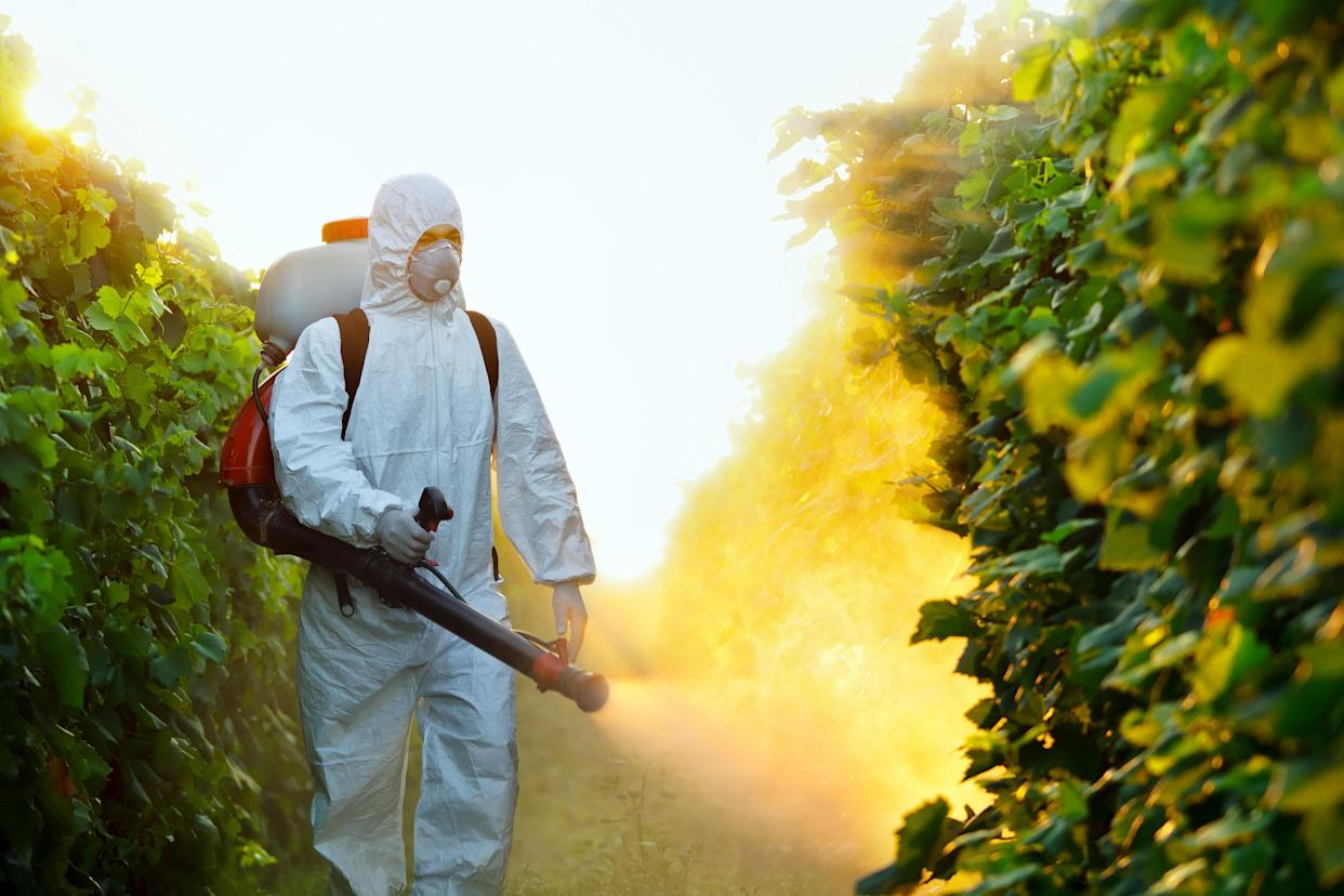 Young worker splash grape with fungicides