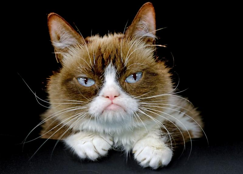 Grumpy Cat RIP: A look back at the life of famous cat