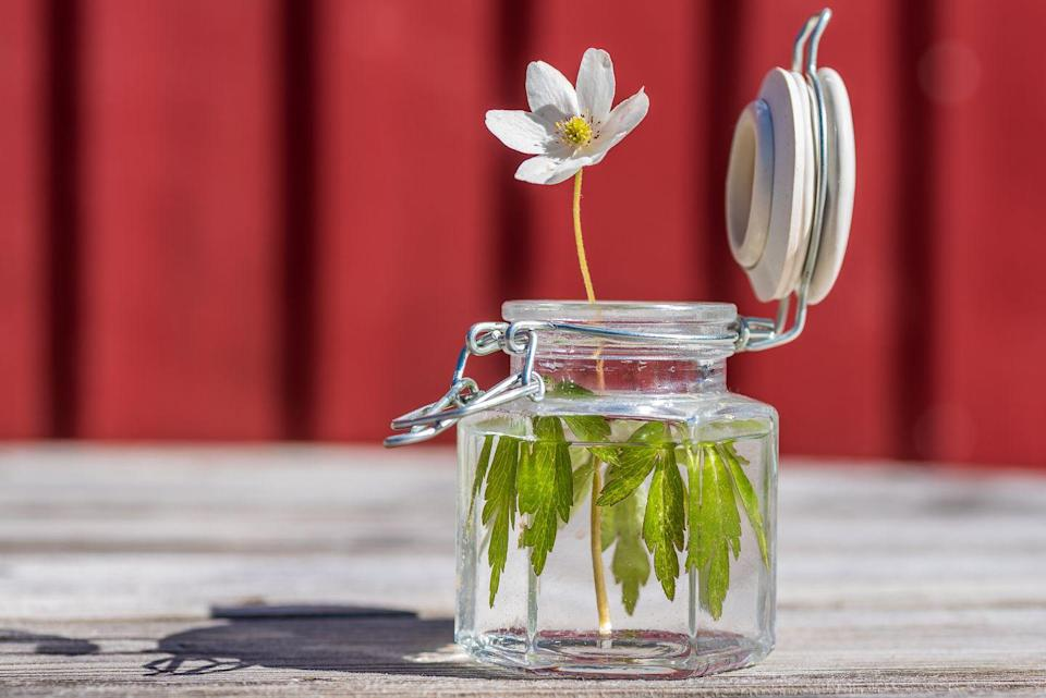 """<p>Admittedly, this may still be a trend. Since the 90s, mason jars have been heralded as the answer to all home needs: candle holders, salad containers, soap dispensers—the list goes on. Now, however, <a href=""""https://www.elledecor.com/design-decorate/trends/g3429/interior-design-trends-2017/?slide=8"""" rel=""""nofollow noopener"""" target=""""_blank"""" data-ylk=""""slk:a new appreciation is blossoming"""" class=""""link rapid-noclick-resp"""">a new appreciation is blossoming</a> for artisan goods like hand-crafted vases, meaning mason jars can go back to their original job of canning preserves. </p>"""