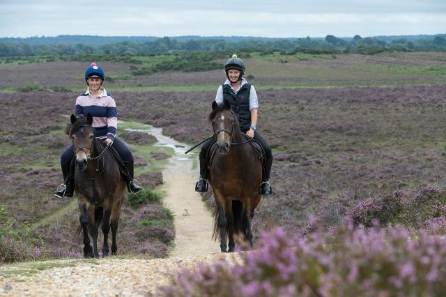 Autumn riding in the New Forest