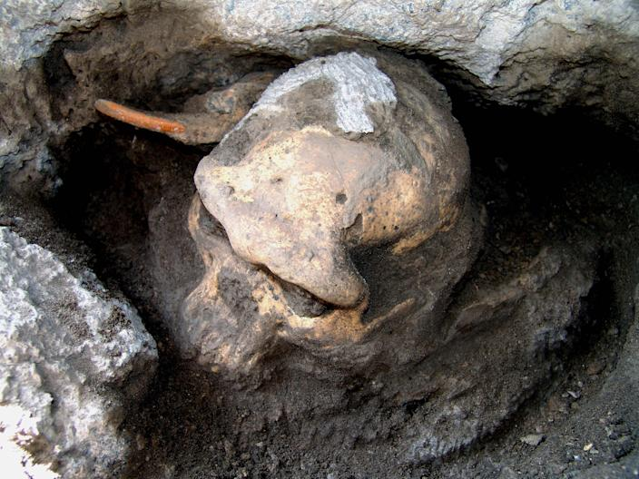 This 2005 photo provided by the journal Science shows a 1.8 million-year-old pre-human skull found in the ground at the medieval village Dmanisi, Georgia. It's the most complete ancient hominid skull found to date, and it is the earliest evidence of human ancestors moving out of Africa and spreading north to the rest of the world, according to a study published Thursday, Oct. 17, 2013, in the journal Science. Next to it is a large rodent tooth for comparison. (AP Photo/Courtesy of Georgia National Museum)