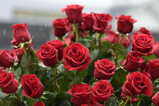 <p>A general view of roses in the infield before the 144th running of the Kentucky Derby at Churchill Downs in Louisville, Ky., May 5, 2018. (Photo: Jamie Rhodes/USA TODAY Sports/Reuters) </p>