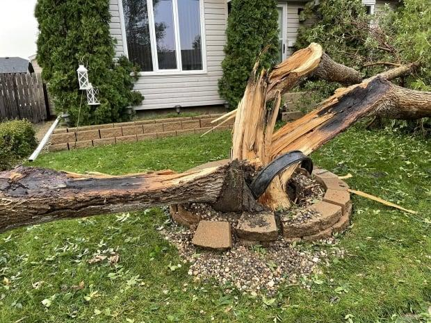 In Regina, the storm damaged homes, vehicles and gardens, and even split trees. (Alexander Quon/CBC - image credit)