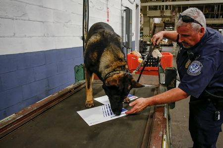 U.S. Customs and Border Protection officer Christopher Avila and his dog Jack check packages for contraband at the JFK mail facility in New York, U.S., August 28, 2018.  REUTERS/Jill Kitchener