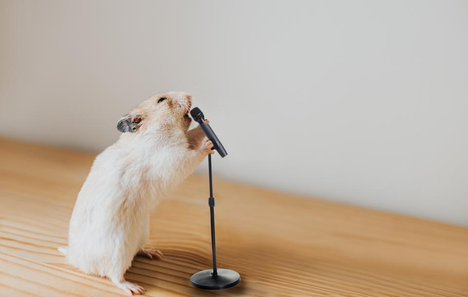 Cute Syrian hamster passionately shouting into a microphone, whilst gripping mic stand. Conceptual with space for copy.