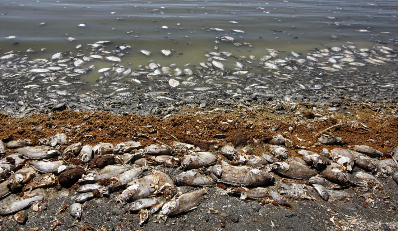 "This Sept. 8, 2012 photo shows dead fish along the Salton Sea shoreline in Southern California. The South Coast Air Quality Management District posted an update in which it acknowledged the possibility that dead fish at the Salton Sea are the source of the rotten-egg smell reported all day Monday. The update noted, however, that ""it is highly unusual for odors to remain strong up to 150 miles from their source."" (AP Photo/Nick Ut)"