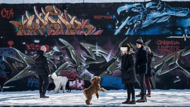 Dogs and their owners hang out in a dog park at the intersection of Slater Street and Bronson Avenue in Ottawa in March 2021.