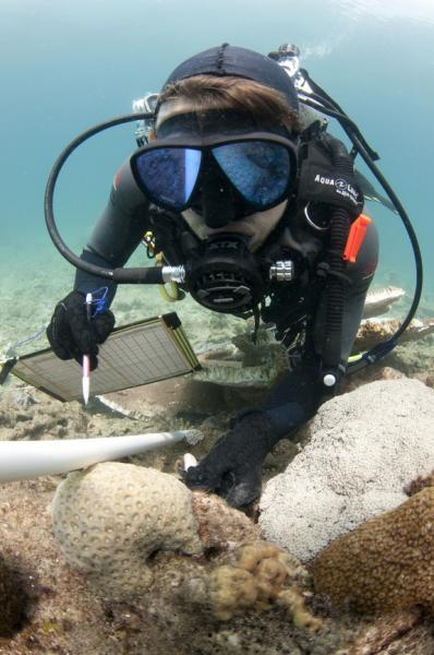 Dredging increases the prevalence of disease in nearby coral reefs, a study finds.