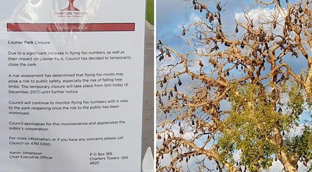Lissner Park in Charters Towers has been closed due a bat problem. Source: Facebook