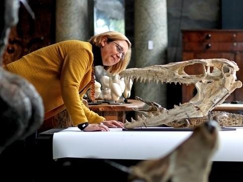 Silke Lohmann, of Summers Place Auctions in Billingshurst views a Mosasaurus head: PA Wire/PA Images
