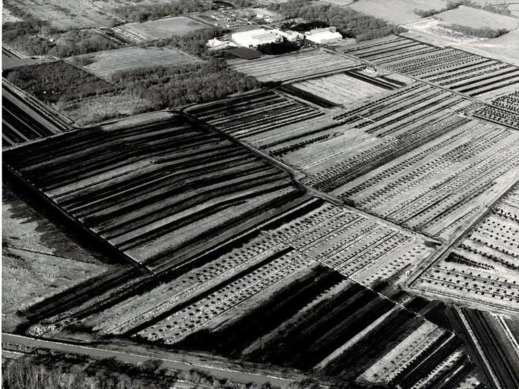 A black-and-white aerial photo of rural fields.