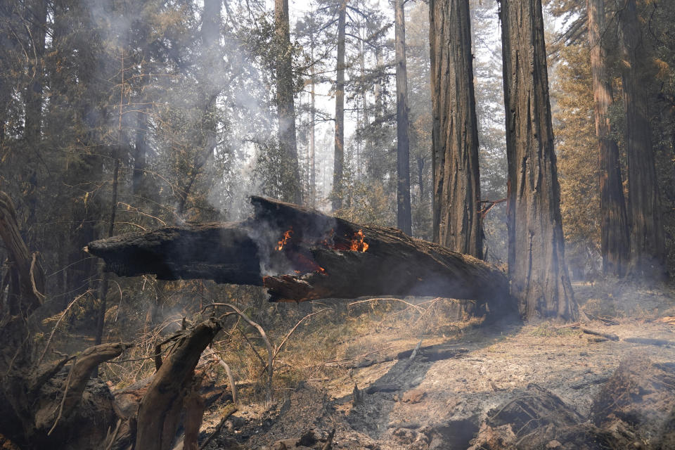 FILE - In this Monday, Aug. 24, 2020 file photo ,A fallen redwood tree continues to burn in Big Basin Redwoods State Park, Calif. Eight months after a lightning siege ignited more than 650 wildfires in Big Basin Redwoods State Park the state's oldest park, which was almost entirely ablaze is doing what nature does best: recovering. (AP Photo/Marcio Jose Sanchez, File)
