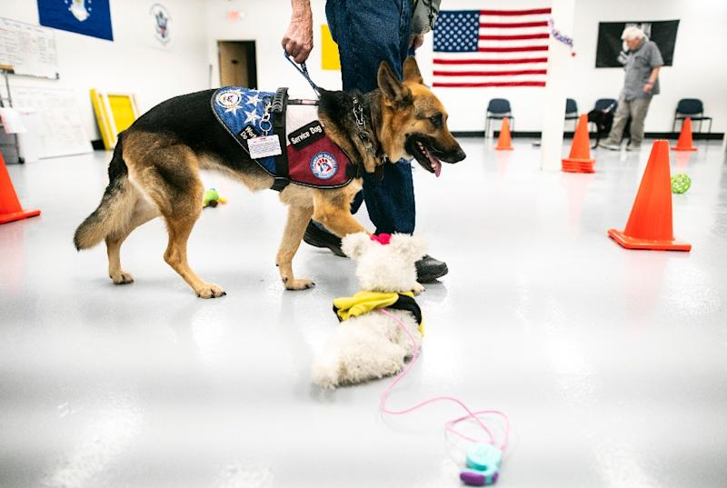 Michael Kidd's dog Millie, seen here, is being trained at Paws of War to help Kidd when times are tough -- he says her assistance has led to a reduced need for medication (AFP Photo/Johannes EISELE)