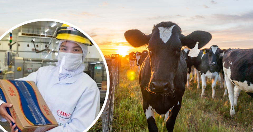 A JBS worker works a box ready for delivery. A cow stands in a field at sunrise.