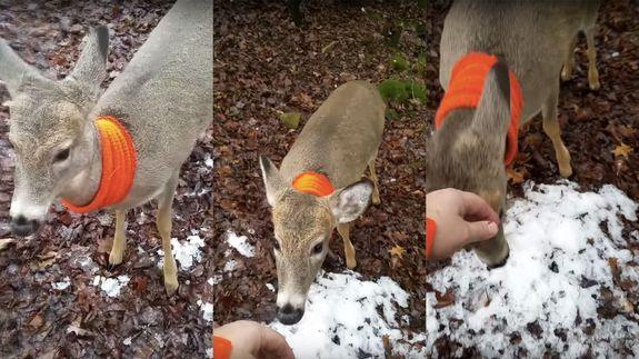 Friendly deer greets a hunter in the woods and demands to ...
