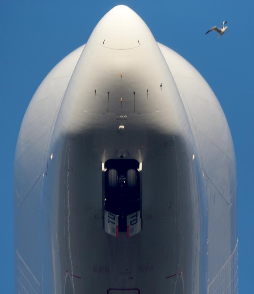 BROUGHTON, ENGLAND - NOVEMBER 07: A bird flys past the nose of an Airbus A300 Beluga aircraft, loaded with wings, as it takes off from the Airbus SAS wing assembly factory on November 7, 2013 in Broughton, United Kingdom. The Airbus wing plant assembles the wings for all Airbus civil aircraft, including the new A350 XWB. The facility produces over 1,000 wings a year and employs more than 6,000 people. Completed wings are transported by the purpose built Beluga aircraft for final assembly in Toulouse or Hamburg. The giant A380 wings are transported by road and then by river craft to Mostyn harbour, where they are loaded onto a custom-built roll-on, roll-off ferry for the trip to France. (Photo by Christopher Furlong/Getty Images)